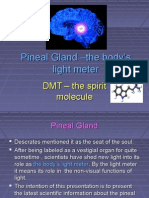 Pineal Gland ?the Body?s Light Meter
