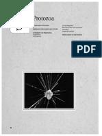 Protistai.pdf