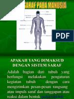 sistem-saraf-pada-manusia1.ppt