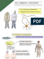 Ud 12 Sistema Nervioso y Endocrino y Org Sentidos