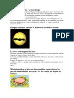 fabulas con imagen 5.docx