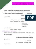 Funciones superiores del sistema nervioso resumen.docx