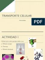 Actividades_Transporte_Celular.docx