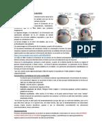 03) Evolución-de-la-dentición-1-y-2.docx