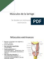 musculos de la laringe