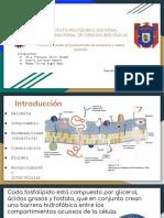 Seminario-3-fisiologia
