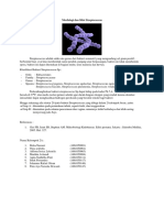 streptococcus.docx