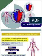 7. Circulatory System