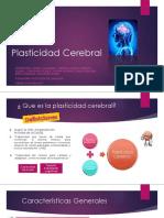 Plasticidad Cerebral 1