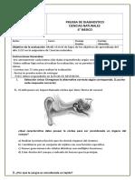 Diagnostico 6º Básico 2019