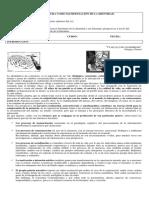LA LITERATURA COMO MANIFESTACIÓN DE LA IDENTIDAD.docx