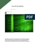 La fotosíntesis de las plantas.docx