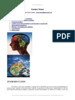 Cerebro-triuno Fuera de Serie - Seminario