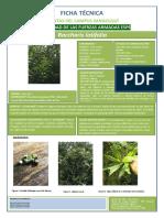 Hernandez Diana Ficha Plantas Espe 4061