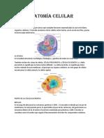 Anatomía Celular