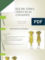 Huesos Torax y Columna Vertebral