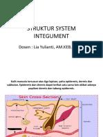 Struktur System Integument