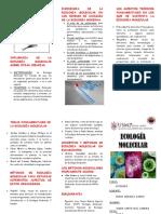 TRIPTICO ECOSITEMA MOLECULAR.docx