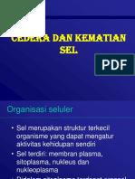 cedera dan kematian sel.pptx