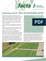 Forest Fact Radiata Pine