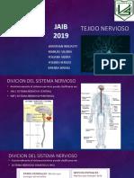 Tejido Nervioso Jaib 2019