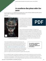 Las Chimpancés Cazadoras Dan Pistas Sobre Los Primeros Humanos _ Ciencia _ EL PAÍS