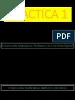 PARASITOLOGIA PRACTICA _ LAMINAS 1 EXAMEN.pptx