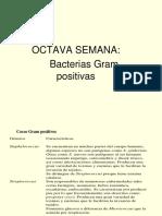 Octava Semana-bacterias Gram Positivas-placa Dentaria