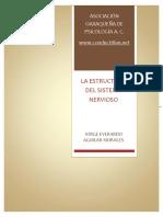 Estructura sistema nervioso.pdf