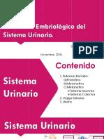 Desarrollo Embriológico del Sistema Genitourinario - copia.pptx