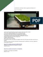Raiz flotante - Hidroponia.docx