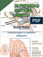 viaolfatoriaysistemalimbico.pdf