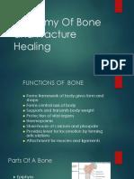 Anatomy of bone healing