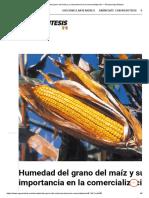 Humedad Del Grano Del Maíz y Su Importancia en La Comercialización — Revista AgroSíntesis