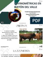 Medidas Bovinometricas Harton del Valle.pptx