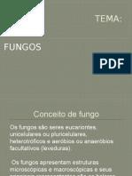Conceito de Fungo