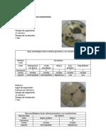 hongos 123.docx