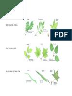 morfología foliar.docx