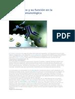 inmunológica anticuerpos.docx