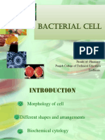 bacterial Cell.ppt