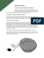 100 CURIOSIDADES DEL CEREBRO.docx