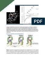 RESUMEN DE QM inhibidores de la cox.docx