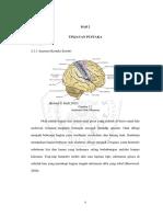 Cerebral cortexx