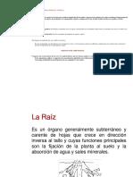 organografia_vegetal (1).docx