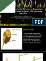 Novedades Sobre La Familia Ditrichaceae (Bryophyta) Expo Plantas