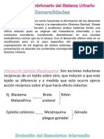 326945562-sistema-Urinario-embriologia.ppt
