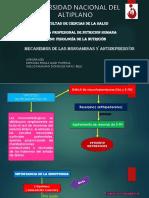 diapositiva de fisio.pptx