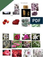 Piedras y Flores de Unicornio (2)