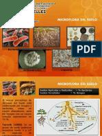 Microflora del Suelo.pptx