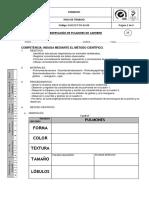 Praxis 16 Observación de Pulmones